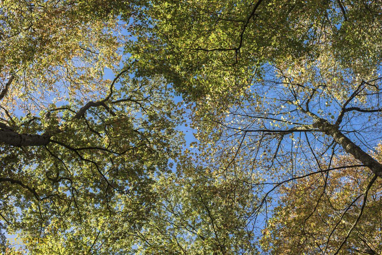 Bos De Braak - Eelde Paterswolde - Zenscapes Landschapsfotografie