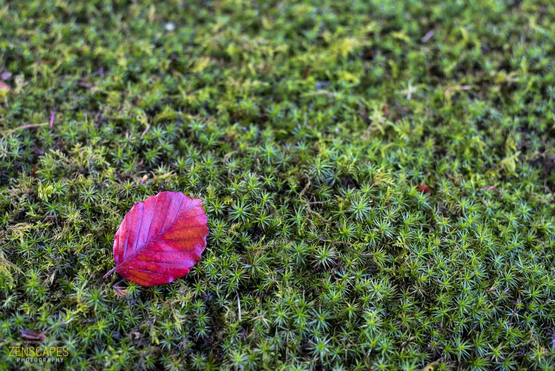 Het laatste mooie blad - contrast groen en rood - Zenscapes Landschapsfotografie