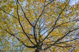 Kleurrijke takken - De Braak Eelde Paterswolde - Zenscapes Landschapsfotografie