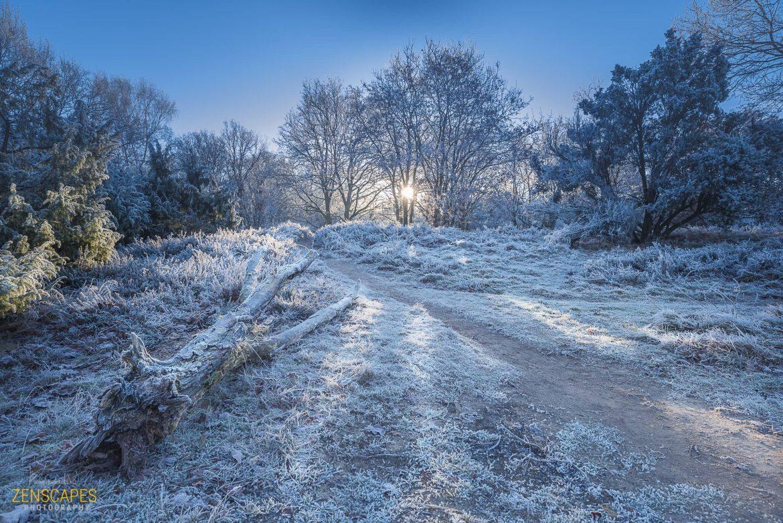 Zonsopkomst door de bomen - Winterlandschap in Drenthe