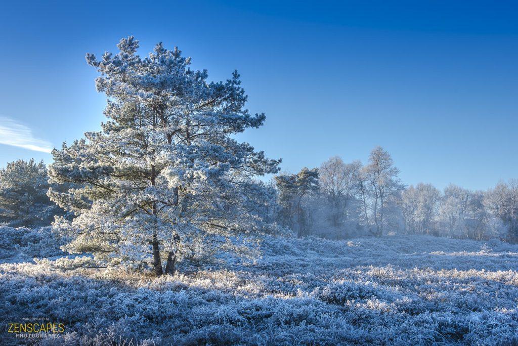 Winter Wonderland - Winterlandschap in Drenthe