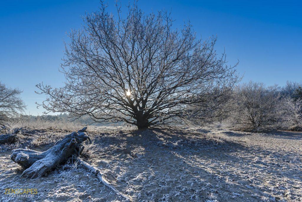 Zon door de bomen - Winterlandschap in Drenthe
