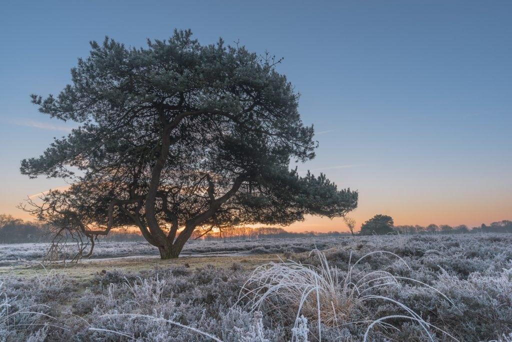 Landschapsfotografie in Drenthe - de Gasterse Duinen