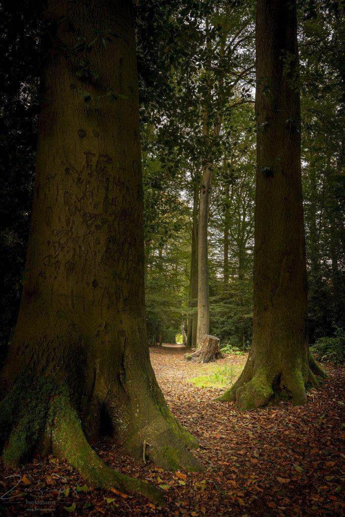 https://www.natuurmonumenten.nl/natuurgebieden/de-braak/route/parkbosroute-landgoed-de-braak-drenthe
