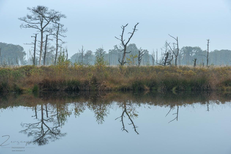 Reflectie - De Appelbergen - Glimmen