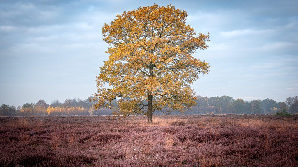 Landschapsfoto van prachtige herfstkleuren op het Balloërveld