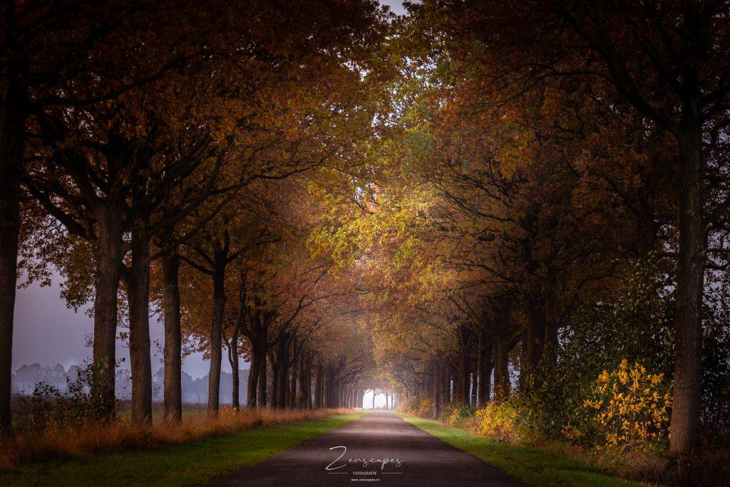 Foto van een bomenrij in de herfst bij het Fochteloërveen