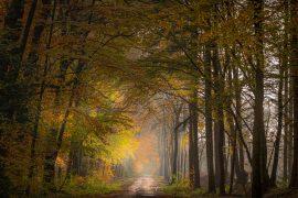 Landschapsfoto van het bos in de herfst bij Norg