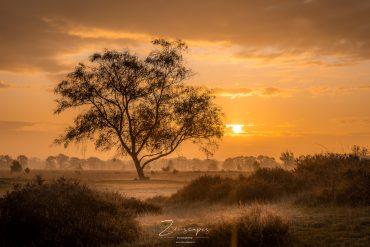 Prachtige zonsopkomst in het Balloërveld