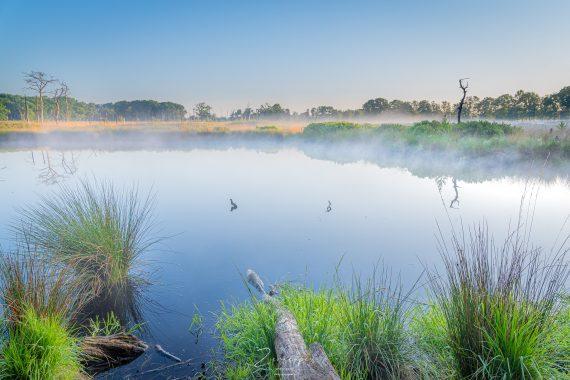 Landschapsfotografie Groningen - Voorjaar in het bos Appelbergen