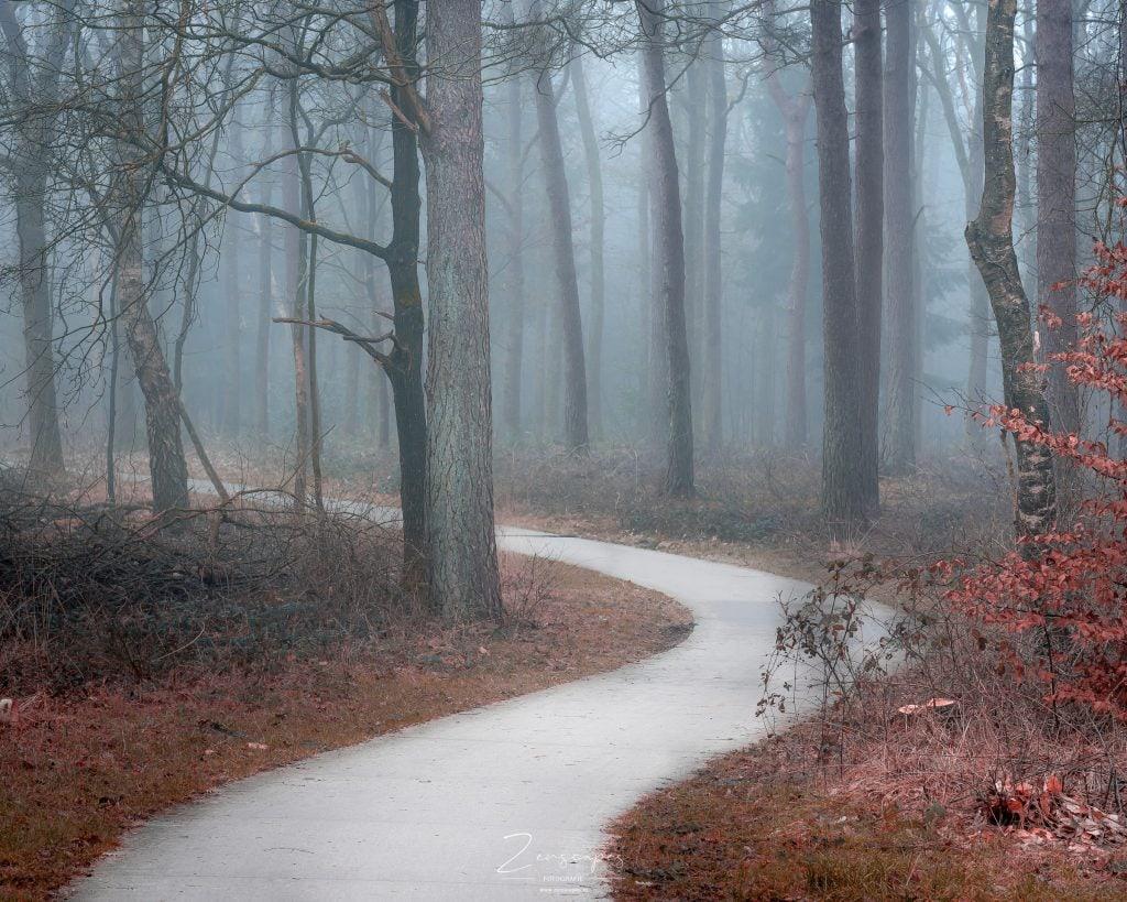 Fotograferen in de mist - Drents-Friese Wold