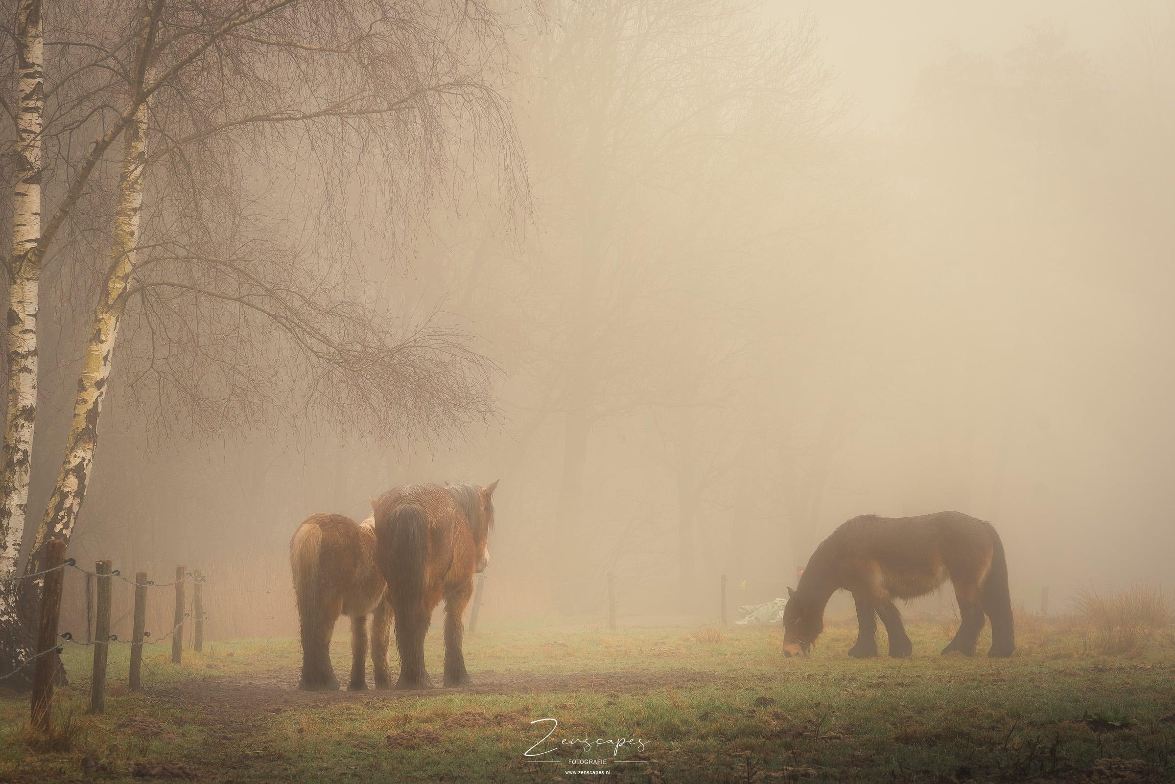 Paarden in de mist - Fotograferen in mistige omstandigheden